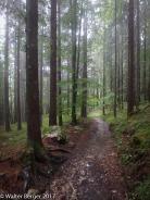 zugspitze forest 1