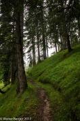 zugspitze forest 3